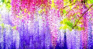 Spring Beauty Colorful Flowers Wallpaper