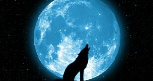 Download Wolf Howling Fantasy Wallpaper