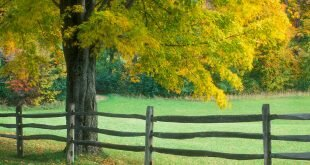 Wooden Fence in Gentle Green Tree Wallpaper