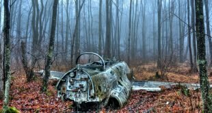 Wreckage in the forest Wallpapers