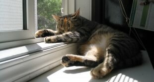 Cat asleep by the window HD Wallpapers