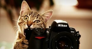 Cat chews Nikon camera HD Wallpapers