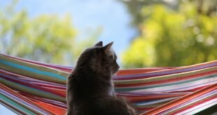 Cat dreams in a hammock HD Wallpapers