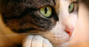 Cat eyes HD Wallpapers