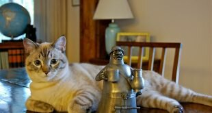 Cat figurines HD Wallpapers
