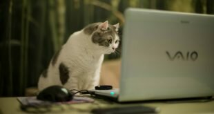 Cat looking at a laptop screen HD Wallpapers
