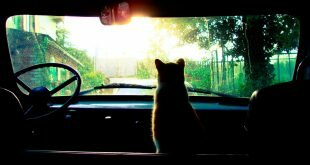 Cat looking at the car windscreen HD Wallpapers