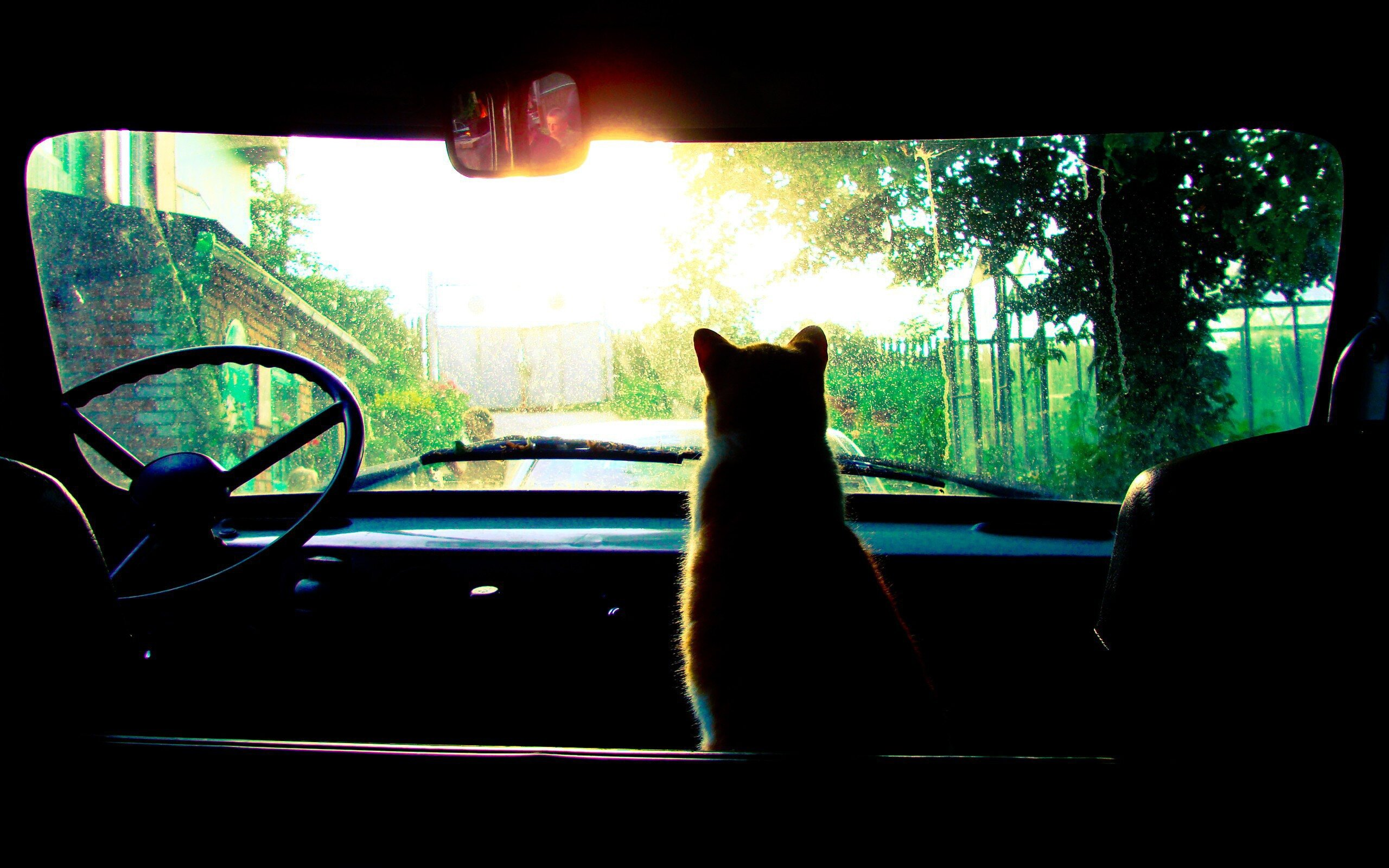 Cat looking at the car windscreen HD Wallpapers photo
