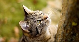 Cat looks up HD Wallpapers