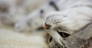 Cat luxuriates on the carpet HD Wallpapers