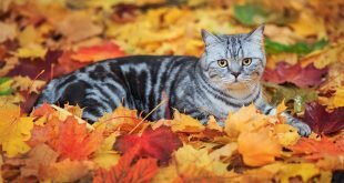 Cat lying on fallen leaves HD Wallpapers