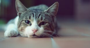 Cat lying on the floor HD Wallpapers