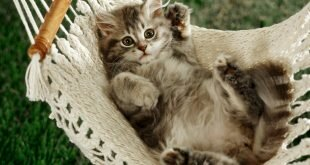 Cat napper HD Wallpapers